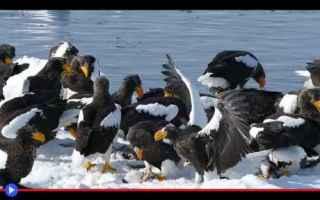 Animali: animali  uccelli  aquile  storia  russia