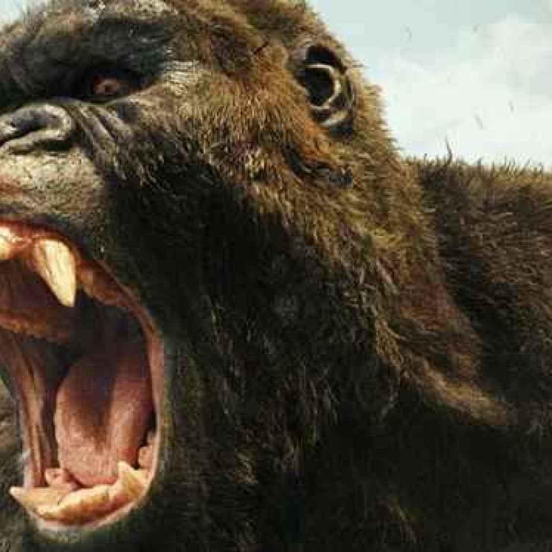 Film Kong Skull Island Complet En Fran Ef Bf Bdais