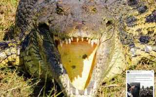Calcio Estero: mozambico  coccodrillo  calciatore