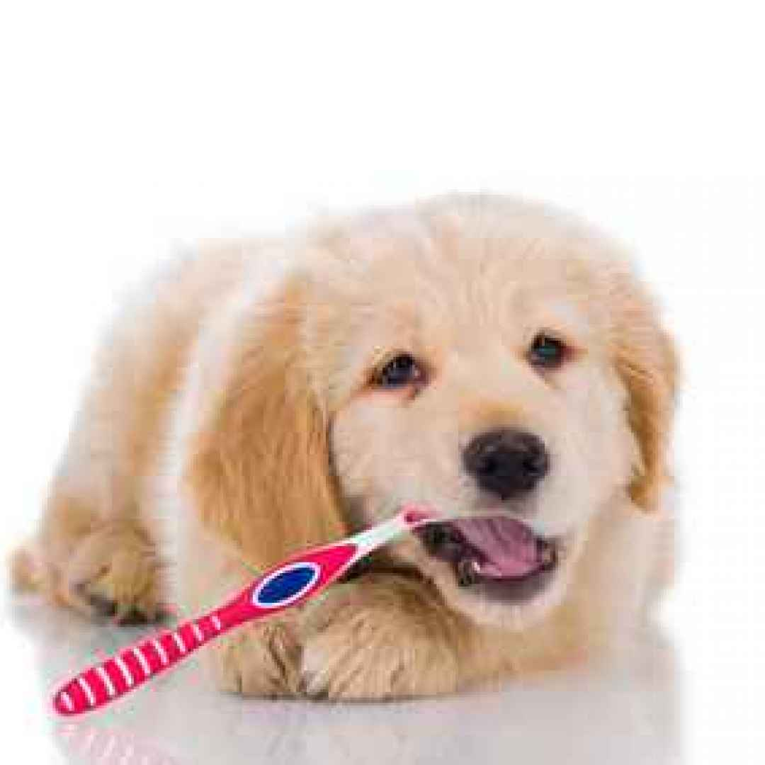 Animali - I denti del cane, pulizia e cura delle ...