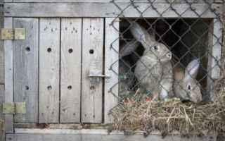 Animali: animali conigli allevamento cibo vegan
