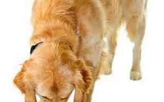 Animali: cane  dermatite  allergia  intolleranza