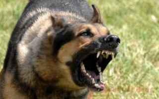 Animali: attacco cani  difesa personale