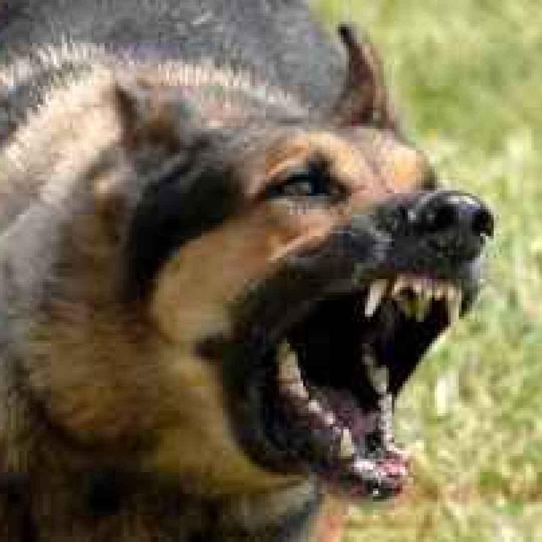Image Result For News Dog