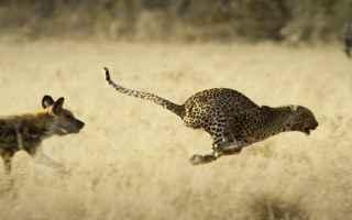Animali: regno selvaggio  gomorra  bred bestelink