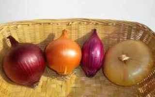 Alimentazione: cipolle  salute  benessere  cuore