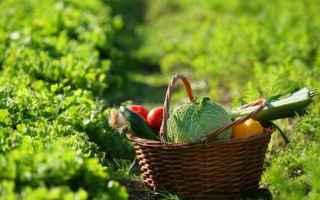 Alimentazione: Chi si sveglia presto mangia meglio
