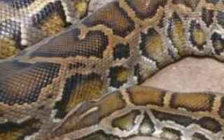 Cronaca Nera: pitone ragazzo serpente vittima