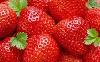 Alimentazione: fragole salute benessere news frutta