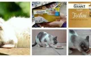 purina  animali  alimentazione
