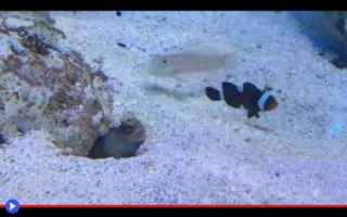 Animali: animali  pesci  acquari  gobidi  acquari