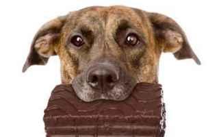 cane  gatto  cioccolato  pasqua