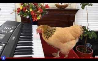Video divertenti: uccelli  musica  divertente  opera