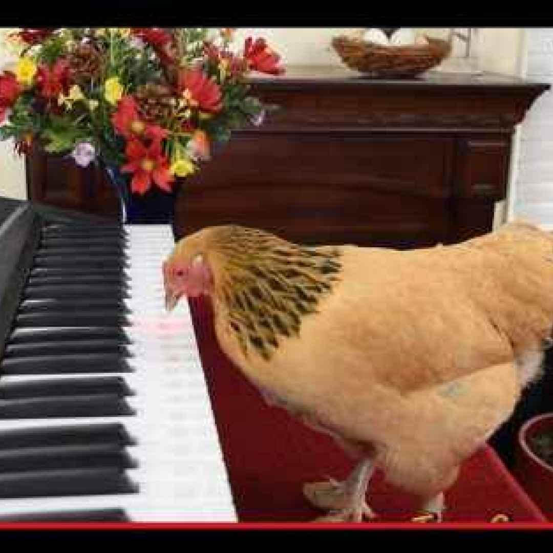 uccelli  musica  divertente  opera