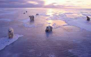 ecologia  mar glaciale artico