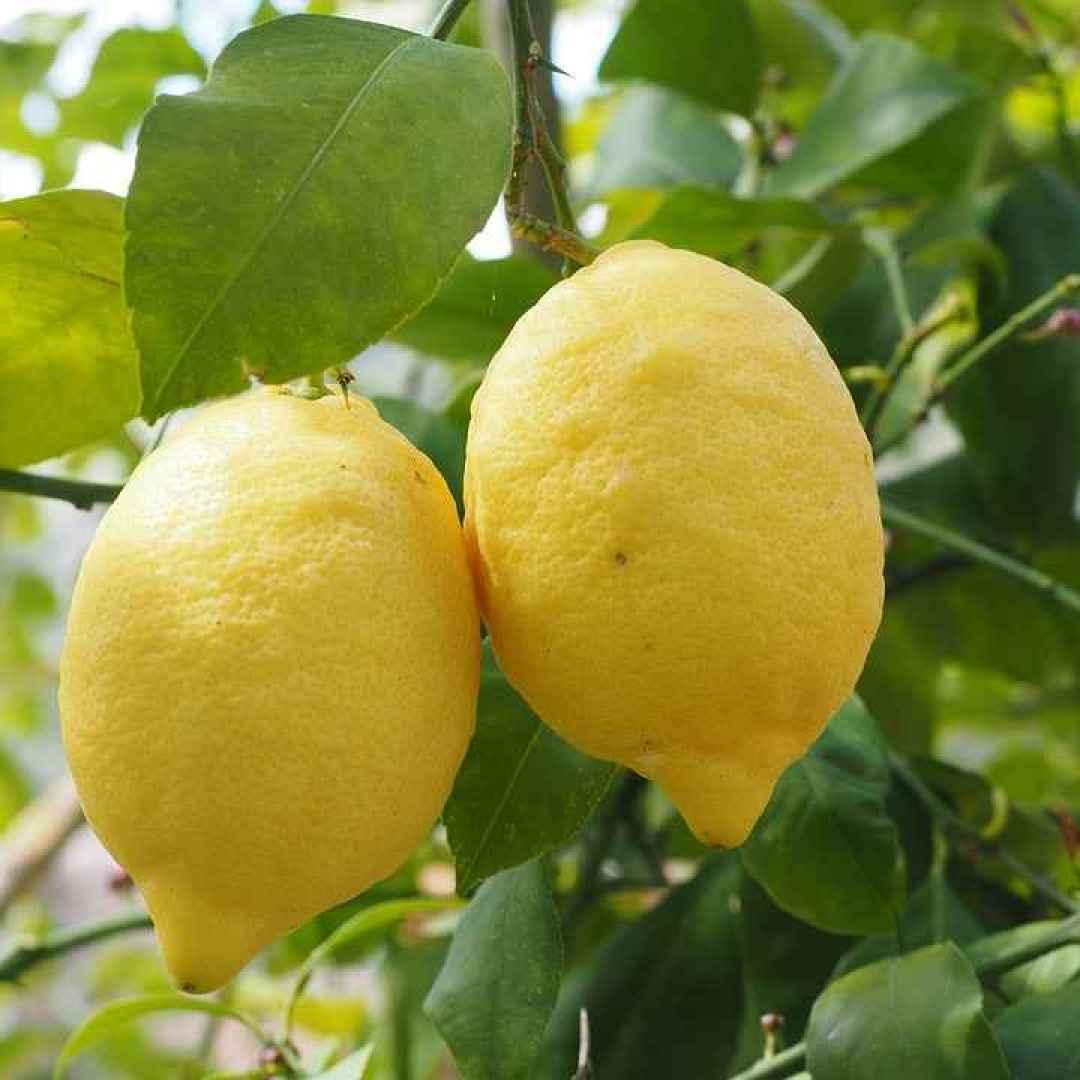 limone  proprietà del limone