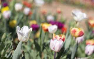 Arte: Cose da fare in Svizzera italiana a Pasqua e Pasquetta: le mostre da vedere