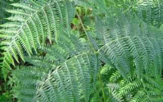 Ambiente: Le Felci - Quando le piante emersero dall