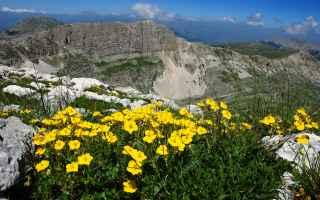 Salute: fiori di bach omeopatia floriterapia