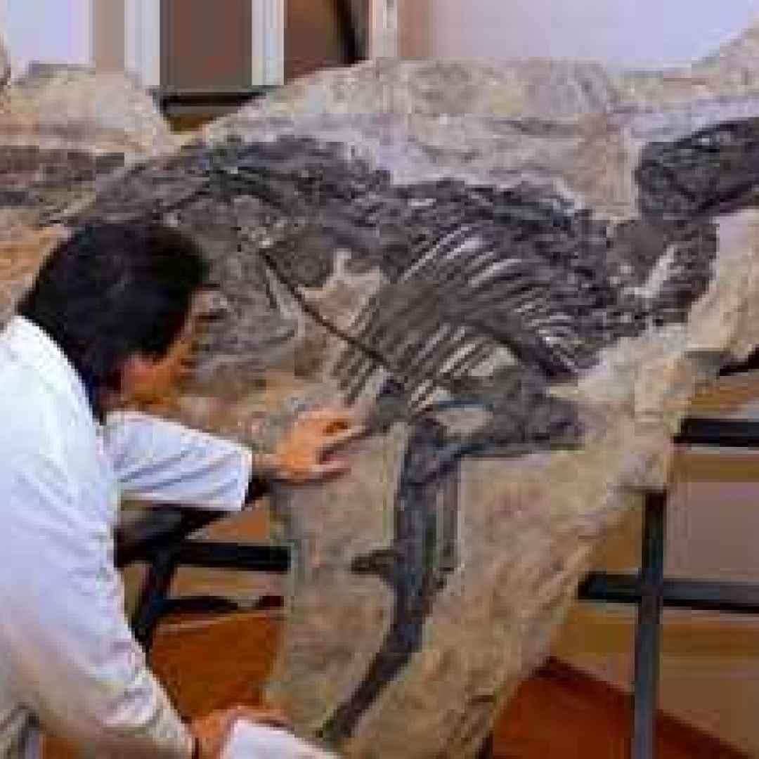 dinosauri  scienza