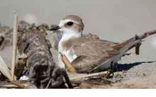 cilento  ambiente  uccelli  natura
