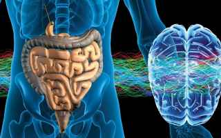 Medicina: cervello  intestino  batteri