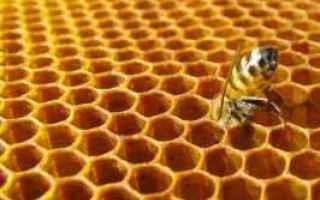 plastica  galleria mellonella  api  cera