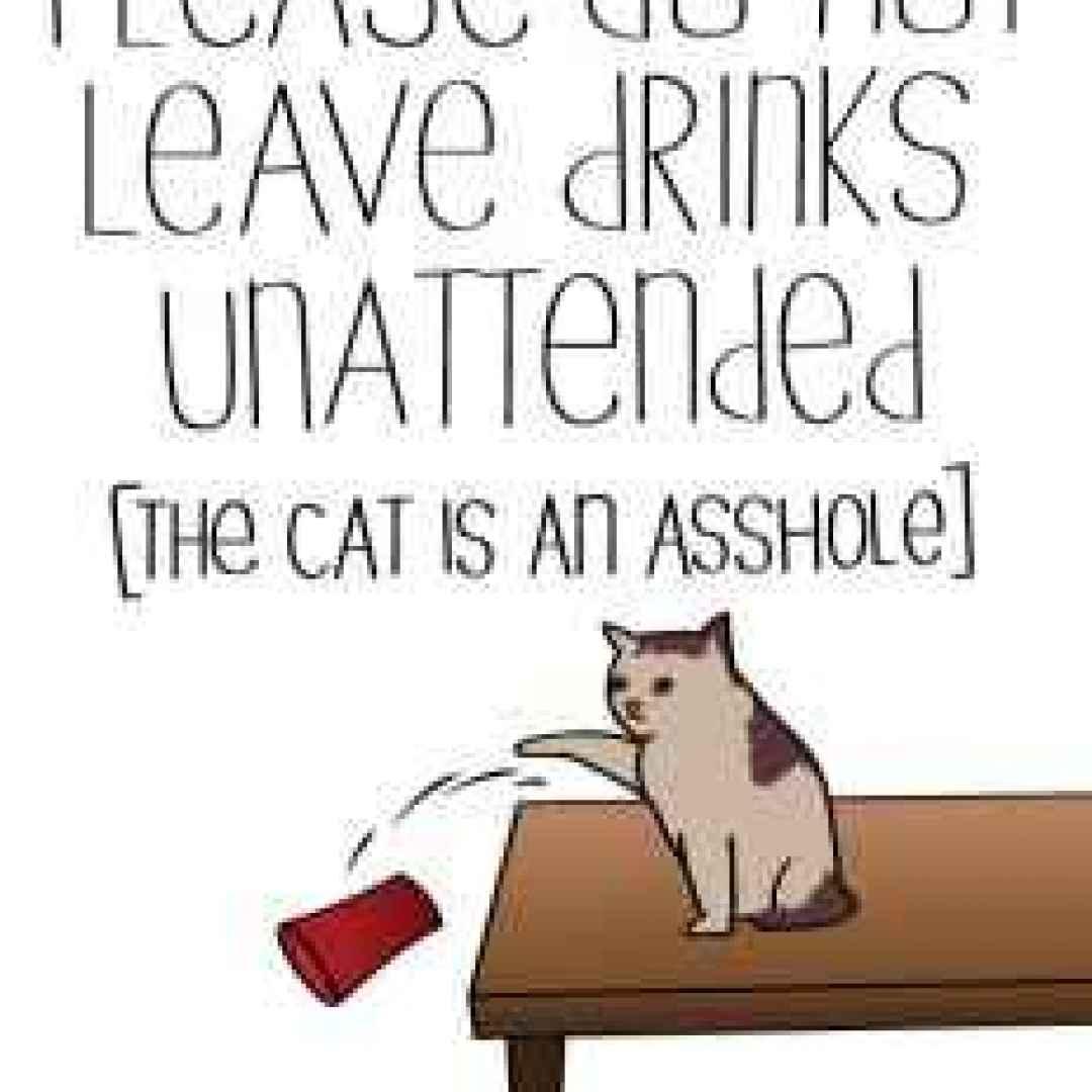 gatto  divertente  universo  spiritoso