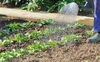 piante  acqua  annaffiatura