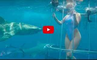 pornostar  squalo