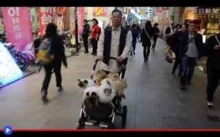 Video divertenti: animali  gatti  giappone  tokyo  strano