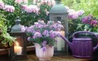 Giardinaggio: balconi  fioriti  piante  vasi