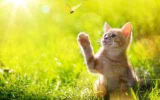 Animali: gatto  casa  famiglia