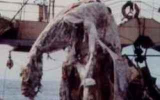 Animali: nuova zelanda  giappone