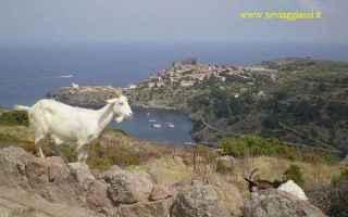 Viaggi: capraia isola toscana