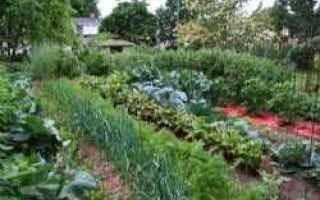 orto  giardino  balcone  terrazza