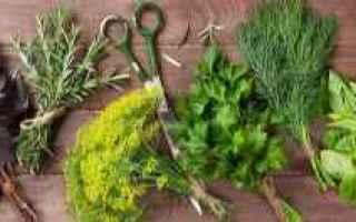 Giardinaggio: erbe aromatiche  raccolta  conservazione
