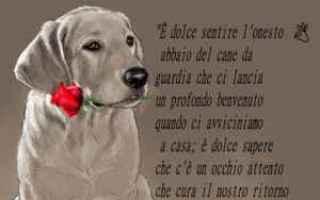 Cultura: cani  frasi cani  aforismi  citazioni
