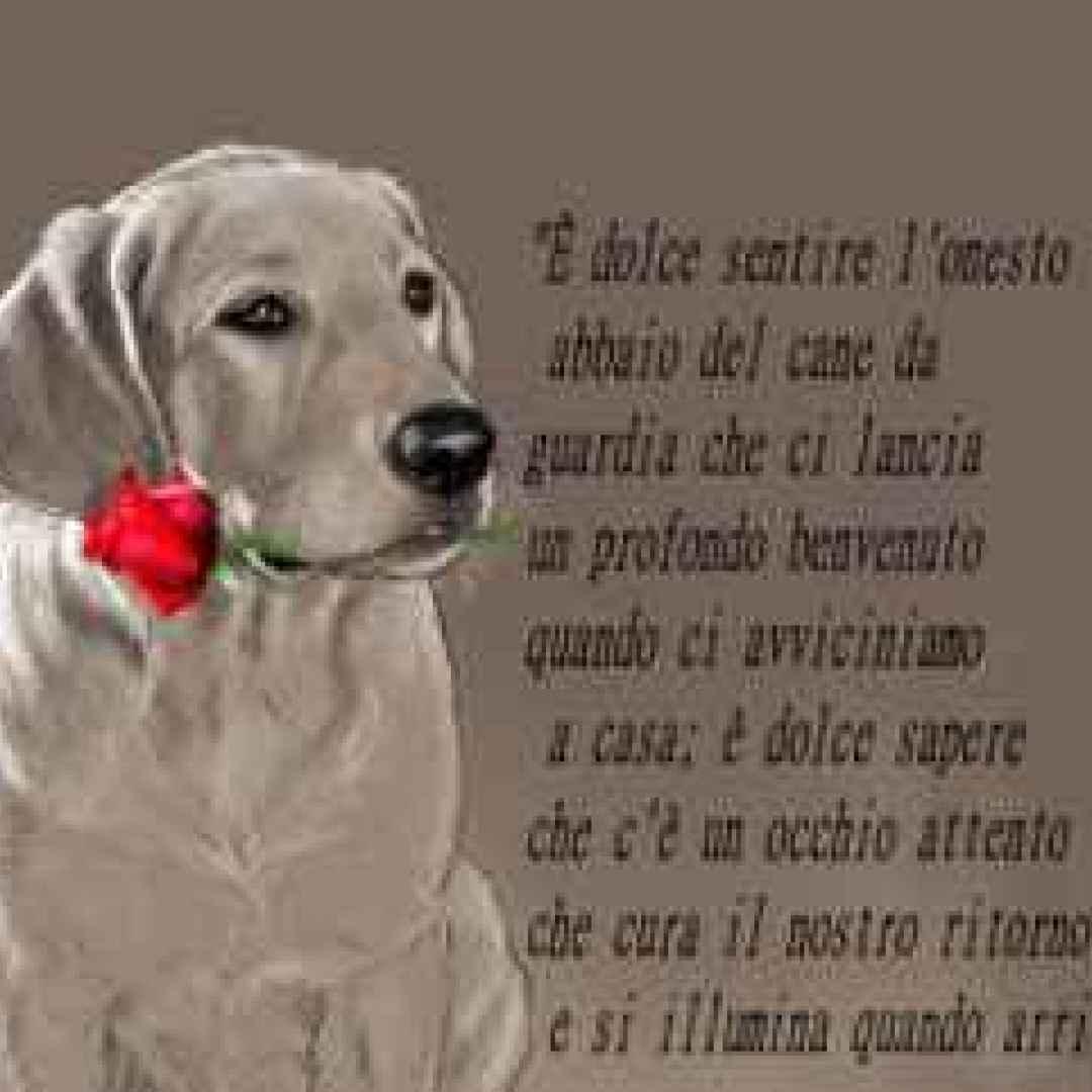 spesso Frasi, aforismi e citazioni dedicate ai cani (Cani) CJ15