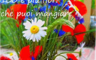 Gastronomia: fiori eduli commestibili cucina mangiare