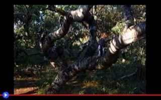 Ambiente: luoghi misteriosi  strano  alberi
