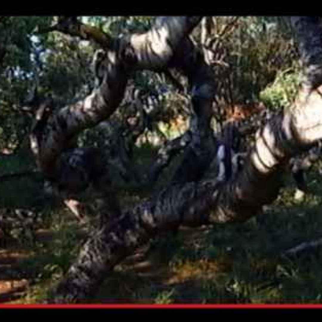 luoghi misteriosi  strano  alberi