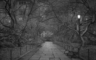 Immagini virali: new york  central park  america  fotografia