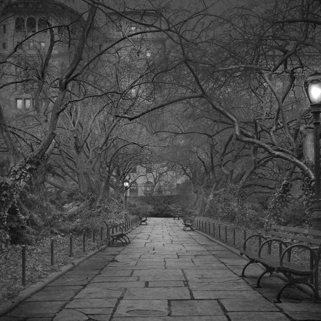 new york  central park  america  fotografia