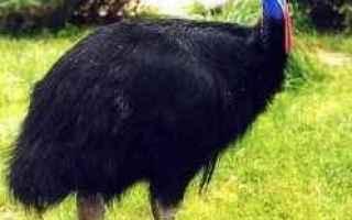 Torino: torino  parchi faunistici  animali