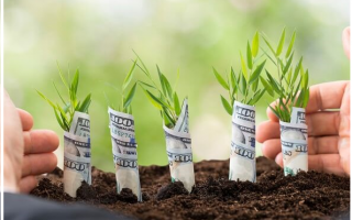 app  vip2zip  zipcoin  economia green