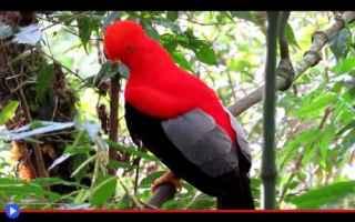 Animali: animali  uccelli  sudamerica  perù