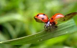 Gli Insetti o Entomi (nome scientifico Insecta), sono una classe di animali appartenenti al grande p