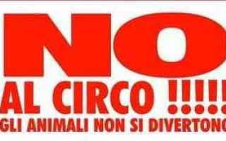 circo  sofferenza  animali  prigione  animali