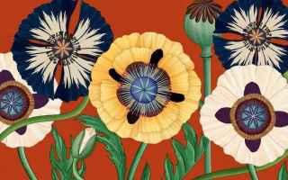 Anime: illustrazione  video  fiori  giappone